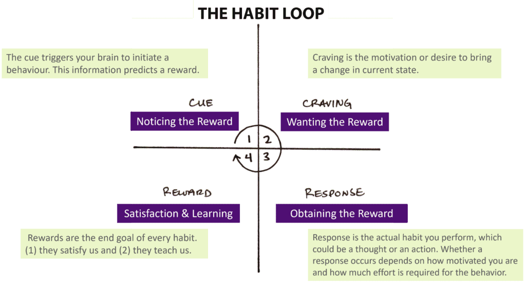 The habit loop showing four main laws of the cue, craving, response and reward in the process